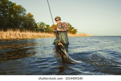 The fisherman is holding a fish pike caught on a hook in a freshwater pond.