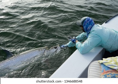 Fisherman holding tarpon to release