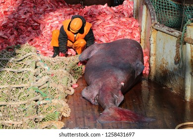 fisherman on the deck of a fishing vessel repairs the trawl