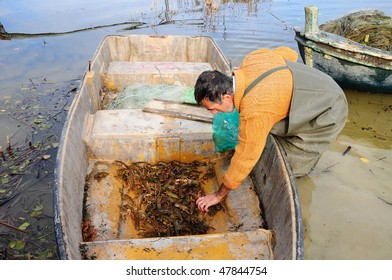 fisherman picking lobsters from boat
