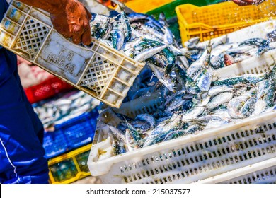Fisherman pouring freshly cought fish from one container into another