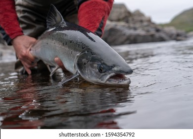fisherman stands in water and holds caught salmon above water and prepares to let go