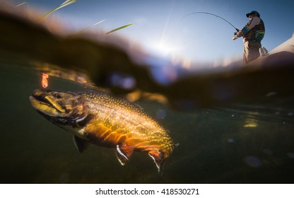 Fisherman and trout, underwater view