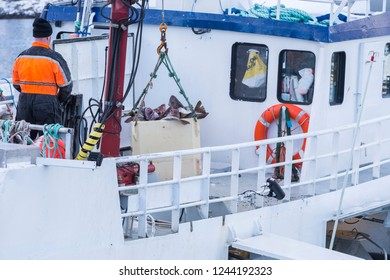 Fisherman unloading his catch of the day the harbor. Container with fresh cod fish lifted with crane