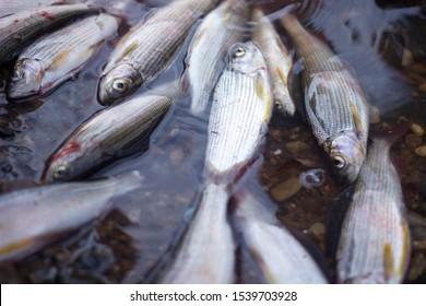 the fishermen catch fish grayling