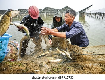 The fishermen salted the fish in the pond
