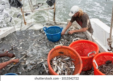 Fishermen sorting catch of the deck of a trawler.