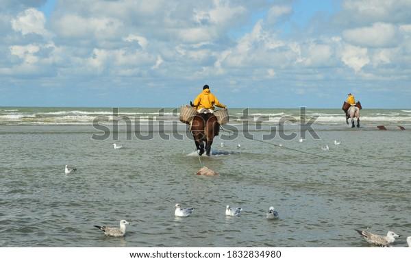 fishermen-their-horses-belgian-600w-1832