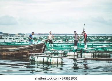 Fishermen at work / seashell harvesting / Rongcheng - China / July 2017