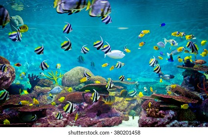 Fishes and coral, underwater life, tropical sea
