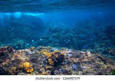 Fishes and corals in tropical seashore underwater photo. Marine diversity. Warm sea shore nature. Coral diverse sea bottom. Oceanic wildlife undersea. Coral reef landscape. Shallow water snorkeling