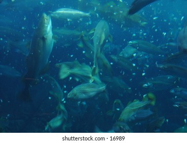 Fishes at lunch time