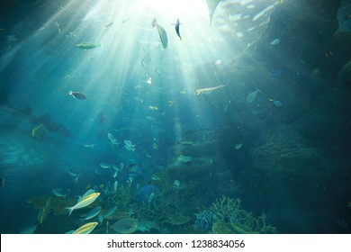 fishes swimming under light