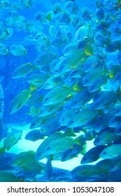 Fishes underwater in natural aquarium