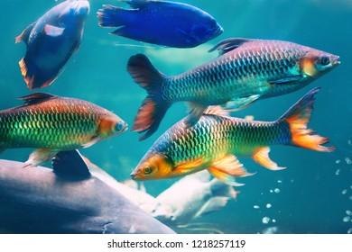 Fishes. Underwater world