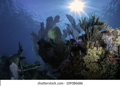 A fisheye shot of the remains of the shipwreck City of Washington in Key Largo, Florida. Covered in coral growth and blue water background with sun rays shining through the water.