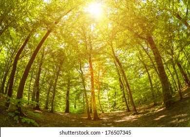 Fisheye shot of trees in the woods, with lens flare effect added in post production