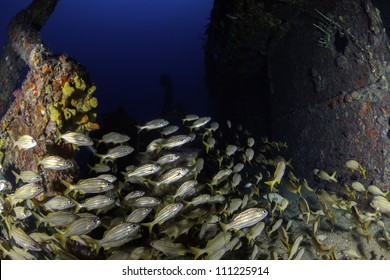 fisheye view of the inside of USCG Cutter Duane in Key Largo, Florida with giant school of yellowtail snappers