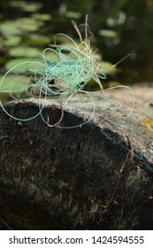 fishhook and fishing line on log in beautiful river