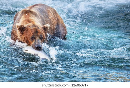 fishing bear in Alaska