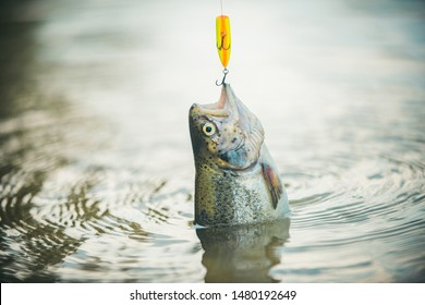 Fishing became a popular recreational activity. Trout. Fly fishing for trout. Brown trout fish