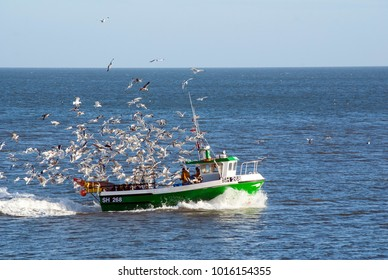 Fishing boat returning to port followed by flock of gulls.