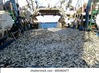The fishing boat took the catch from the ocean. Fishing in the sea. Fishing on the ship. A lot of tons of fresh fish.