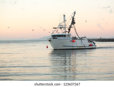 Fishing boat trawler entering harbor at Ventura at dawn with lights and birds following