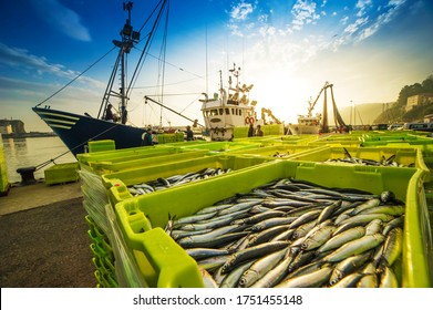 fishing boat unloading its catch of the day