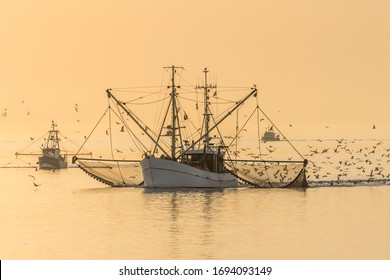 Fishing Boats with Nets and Swarm of Seagulls at Sunset, North Sea, Germany