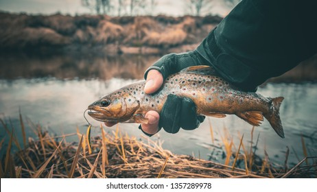 Fishing, brown trout.