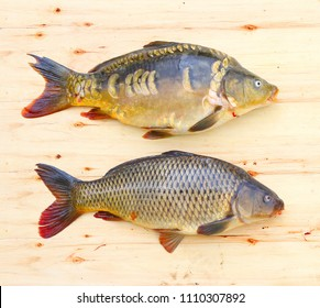 Fishing catch. Traditional food for christmas table in Czech Republic and Poland. The Common Carp ( Cyprinus Carpio ).