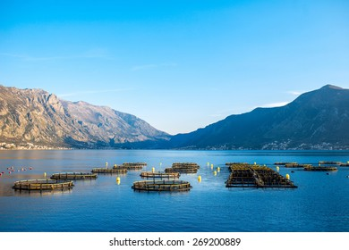 Fishing farm in Kotor bay, Montenegro. General plan with mountains on background