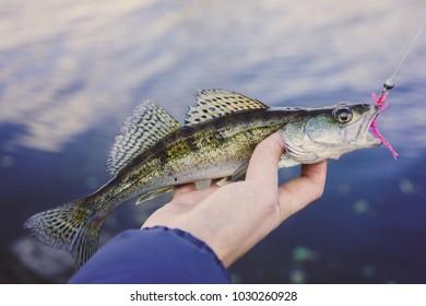 Fishing. Fisherman and fish