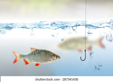 Fishing hook under water and fish rudd
