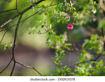 Fishing line and bobber tangled in tree branch.