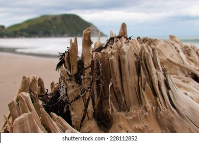 fishing line tangled around frayed edges of drift wood log washed up at beach