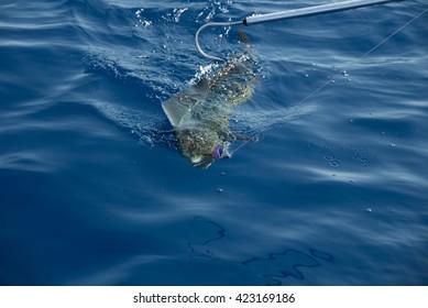 Fishing Mahi Mahi