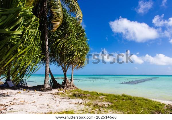 Fishing pegs for catching shellfish on the shore of the island Fanning, Republic of Kiribati