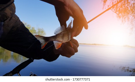 fishing for perch on spinig