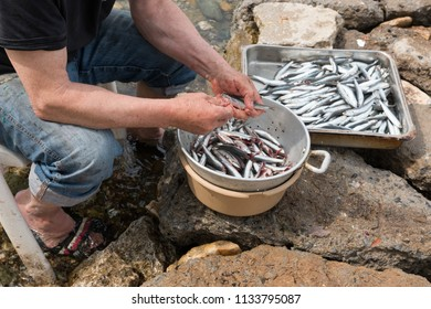 fishing port with fish and greece fishermen