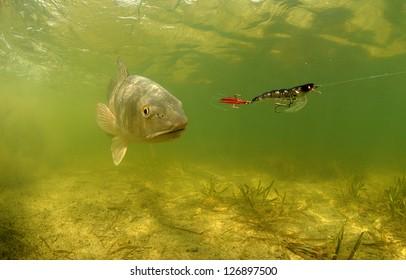 fishing for redfish underwater using bat