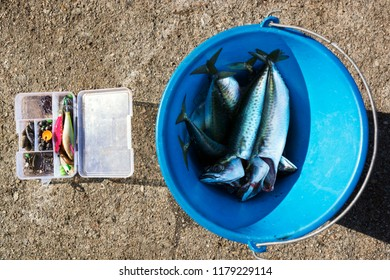 fishing tackle and fishes catching  in marina port