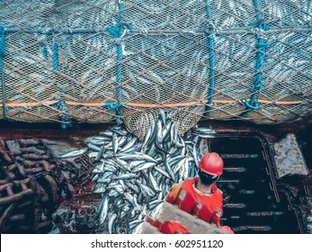 Fishing with a trawl. A large trawl with fish was dragged onto the deck of the ship