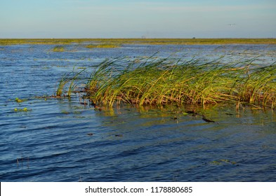 Fishing trip to lake okeechobee Florida