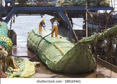 Fishing vessel. Great catch of fish in thrall. The process of casting the fish in the tank. Large freezer trawlers.