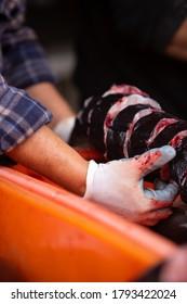 Vendeur de poisson tenant une anguille de congre fraîche en tranches