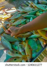 Fishmonger in the market