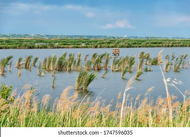 Fishpond Becej in Serbia. In the fishpond located at area of 450 hectares. The fishpond area includes is a favorite destination of tourists and sports fishermen.