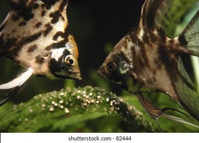 e631debb6bcf Fishes Lisbon Oceanarium Stock Photo (Edit Now) 164597 - Shutterstock